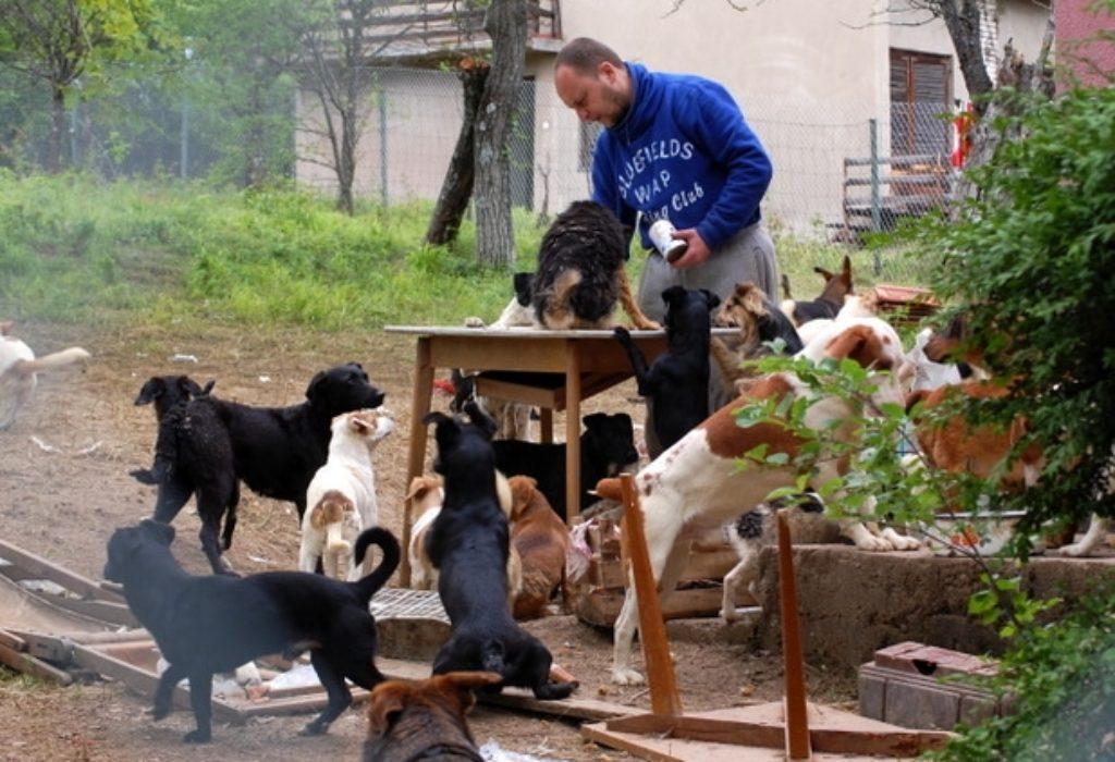Serbie : Un homme dort avec 600 chiens abandonnés pour les protéger du froid