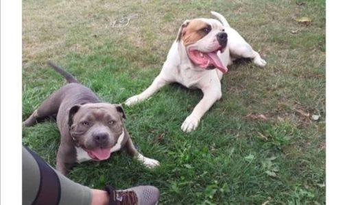 (FOTO) Srpkinji ukrali pse. Nalazaču sledi nagrada