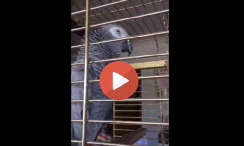 Papagaj izgovorio najskuplje Srpske reči