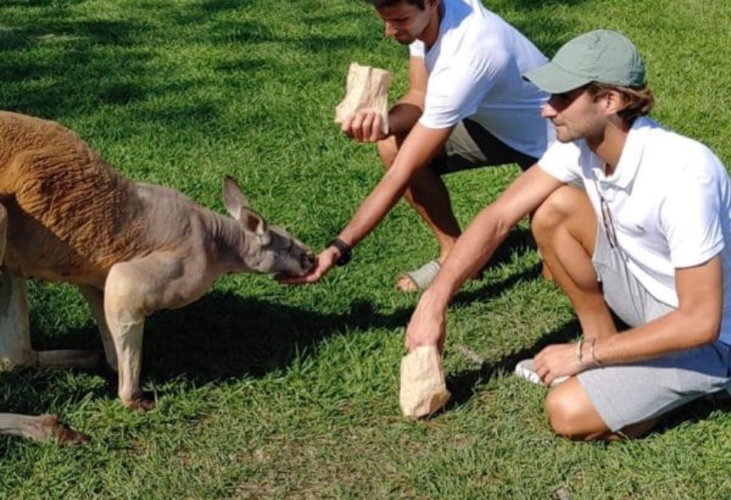 (PHOTO)NOVAK DJOKOVIC VEUT S'INSPIRER DU KOALA