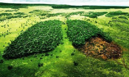 Serbie : 1 milliard d'arbres vont être plantés en Serbie