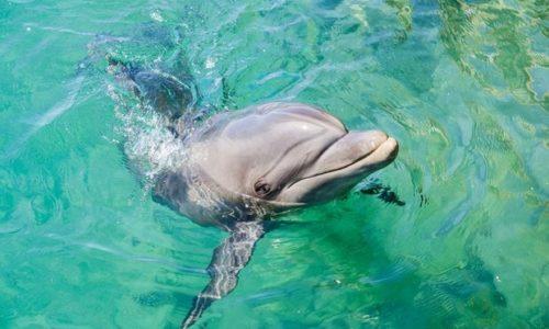 (VIDEO) «Nastvarna slika» delfina u čistoj vodi Venecije. Jedna pozitivna stvar u svemu ovome