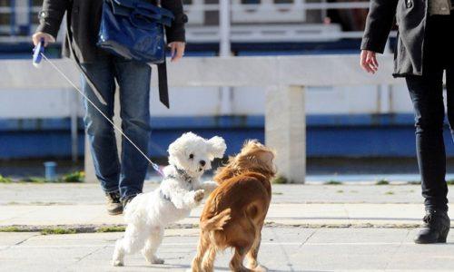 Serbie : Les habitants réclament une sortie pour leur chien