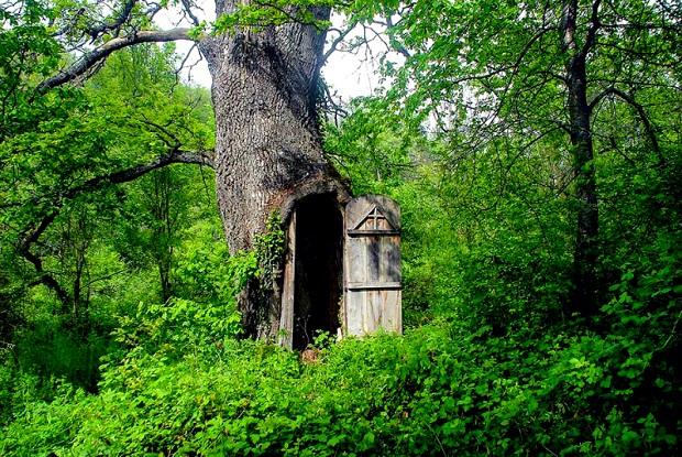 (VIDEO)Comme dans un conte de fées: une église serbe cachée dans un chêne