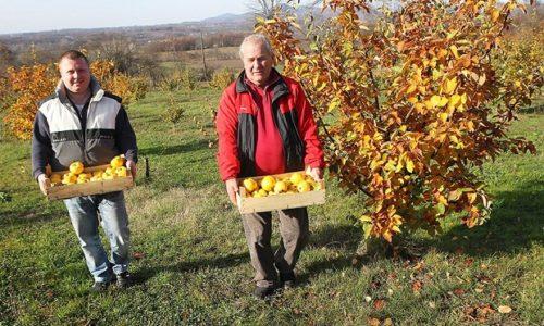 Serbie: le village avec le plus de coings d'Europe