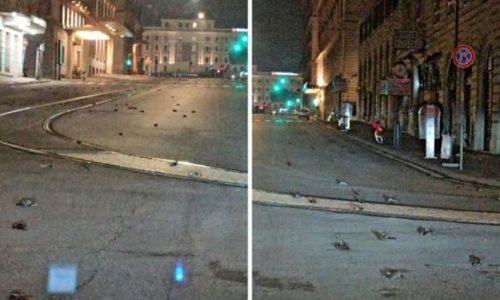 (VIDEO)Des centaines d'oiseaux morts ont couvert les rues de Rome le soir du Nouvel An