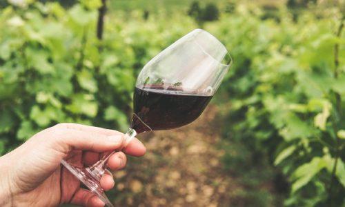 Francuzi napravili prvo vino sa kanabisom